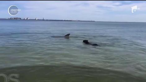 Cei care au ieșit la plimbare pe malul mării au fost cuceriți! Un câine a înotat minute bune alături de un delfin, în staţiunea Eforie