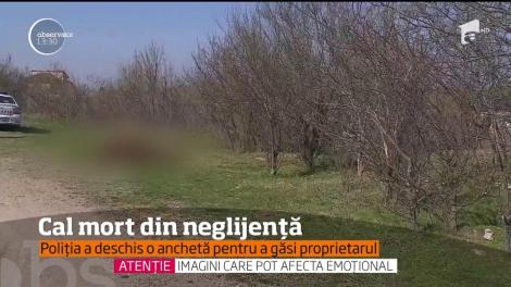 Imagini de o cruzime fără margini au fost surprinse în apropiere de Bucureşti