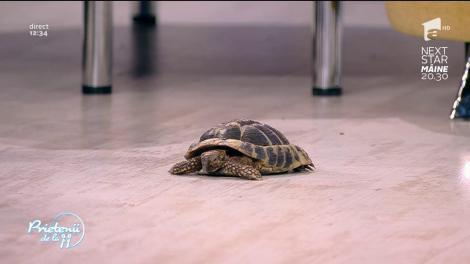 Unele specii de broaște țestoase nu au voie să fie deținute în mod legal