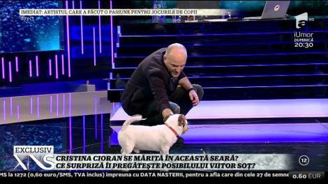 Cristina Cioran a aflat că are un câine de pe Facebook! Amon a făcut senzaţie în platoul de la Xtra Night Show!