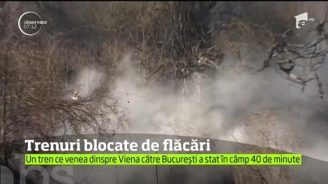Un puternic incendiu de vegetaţie a oprit traficul feroviar pe magistrala 200 Deva - Arad