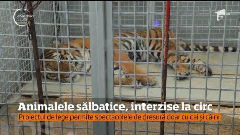 Animalele sălbatice vor fi interzise la circ. Doar caii şi câinii vor apărea în spectacole