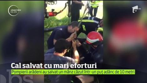Misiune impresionantă a pompierilor din judeţul Arad, chemaţi să salveze un cal căzut într-o fântână