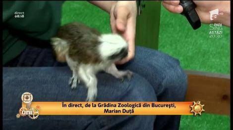 Invitație la grădina zoologică din București. De Ziua Copilului intrarea este gratuită pentru copii şi adolescenţi