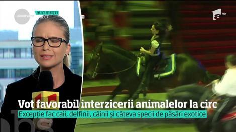 Vot favorabil interzicerii animalelor la circ