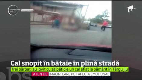 Imagini ÎNFIORĂTOARE! Un cal prăbușit în mijlocul străzii, bătut fără milă de trei bărbați (VIDEO)