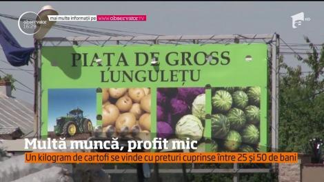 Agricultorii vând un kilogram de cartofi cu prețuri cuprinse între 25 și 50 de bani