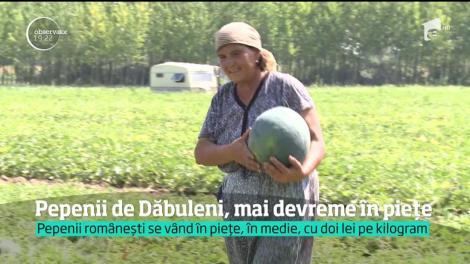 Pepenii de Dăbuleni, mai devreme în pieţe