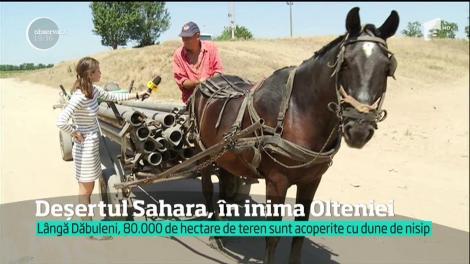 România, în pragul dezastrului. Ce s-a descoperit după mai multe zile de caniculă! A crăpat pământul în Bărăgan!