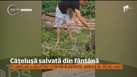 Operaţiune dificilă de salvare! O căţeluşa a fost salvată dintr-o fântână adâncă de 30 de metri