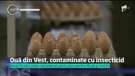 România e din nou în mijlocul unui scandal uriaş din alimentaţie. Ouăle contaminate din Germania provin de la găini tratate cu medicamente din ţara noastră
