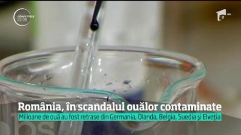 Milioane de ouă toxice au pus Europa pe jar, iar străinii arată cu degetul spre România în cel mai mare scandal alimentar