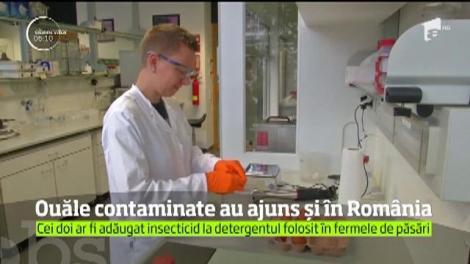 Ouăle contaminate au ajuns şi în România!
