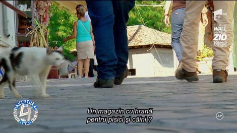 Carmen Tănase a hrănit toate animalele abandonate care i-au ieșit în cale în Grecia