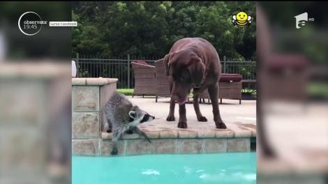 Prietenie de senzaţie între un raton şi un câine
