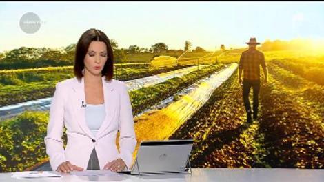 Dumnezeu ne dă, dar nu ne bagă şi în traistă. Avem producţie-record de legume româneşti, însă riscăm să aruncăm totul la gunoi
