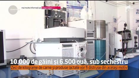 Descoperire îngrijorătoare în Satu Mare: 10 mii de găini şi 6.500 de ouă, contaminate cu pesticide