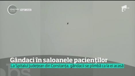 Gândaci în saloanele pacienților de la Spitalul Județean din Constanța