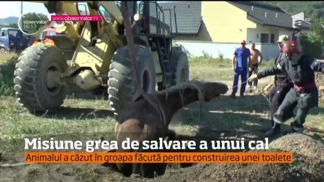 Pompierii din Neamţ, misiune grea de salvare a unui cal cazut într-o groapă