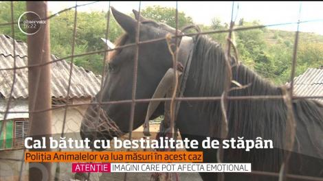 Un bărbat din judeţul Bacău s-a ales cu dosar penal, pentru că îşi bătea calul zilnic