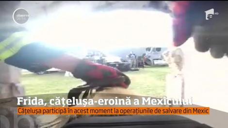 Frida, cățelușa-eroină a Mexicului! Patrupedul participă la operațiunile de salvare a victimelor prinse sub dărâmături
