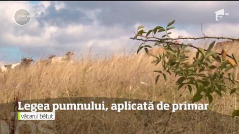 Un primar din România, surprins în timp ce BĂTEA un om al localității pe care o conduce!