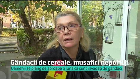 Ploşniţele cerealelor au invadat mai multe oraşe din România