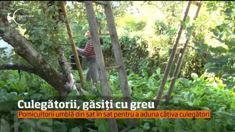 Tot mai puțini români vor să lucreze cu ziua. Pomicultorii sunt nevoiţi să aducă forţă de muncă de la sute de kilometri distanţă!