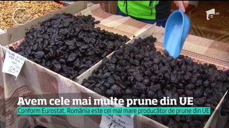 Românii, cei mai mari producători de prune din Europa. Însă, recolta nu ajunge în borcanele cu magiun, ci în cazanele de ţuică