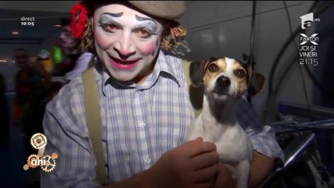 Mai vedem animale la circ? Marian Duță, în direct, la Circ & Variete Globus