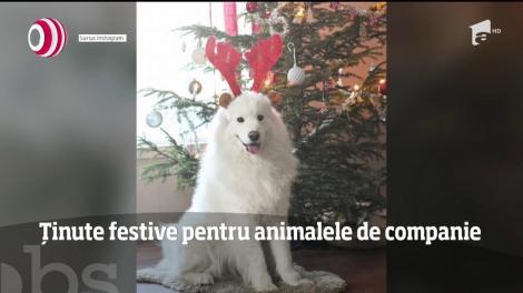 Ținute festive adecvate sărbătorilor de iarnă pentru animalele de companie