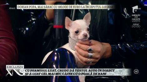 Daniela Crudu a primit cadou un căţel de 2.000 de euro!