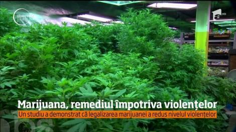 Marijuana, remediu împotriva violenței