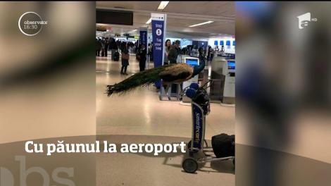 """Imagini șocante în aeroport. Ce au descoperit angajații aeroportului la o pasageră: """"Niciodată nu am văzut așa ceva!"""""""