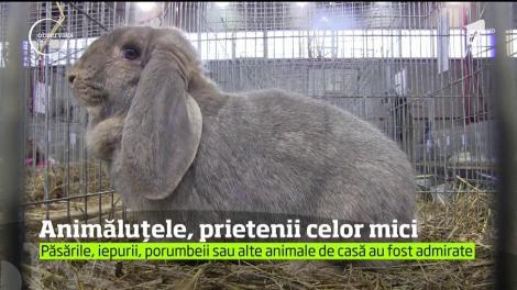 Expoziţie de animale de casă, în Baia Mare