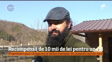 Recompensă de 10 mii de lei pentru un cal dispărut de la o fermă din judeţul Vâlcea