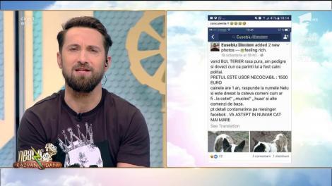 """Răzvan şi Dani, amenintați pe Facebook! """"Ăștia dăla atena1...Bregatitifă baieți că urmează răzpoi mare"""""""