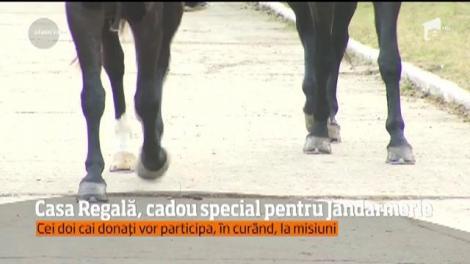 Cadou cu o simbolistică aparte pentru Jandarmeria Română! Casa Regală a dăruit doi cai Detaşamentului de Cavalerie