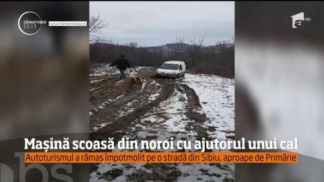 Mașină scoasă din noroi cu ajutorul unui cal, pe o stradă din cartierul Guşteriţa, Sibiu