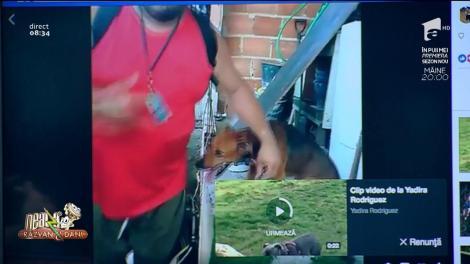 """Ce dovadă mai mare de iubre? Când omul ajunge să-i pupe """"mâna"""" câinelui său, din respect. Cel mai devotat prieten al omului, răsplătit pe măsură"""