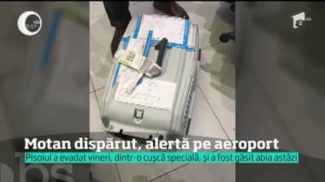 Un motan a pus pe jar pe toată lumea, pe cel mai mare aeroport al României, Otopeni