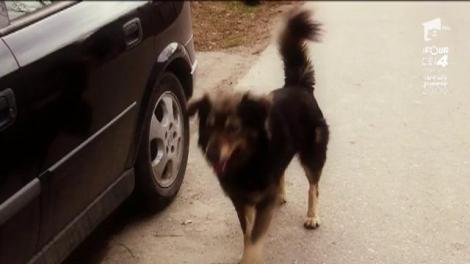 """Momente de panică pentru Jean de la Craiova: """"Când am fost ultima dată la furat de cireșe, m-a ținut un câine în pom până seara"""""""