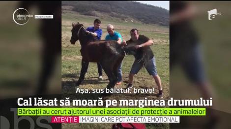 Cal lăsat să moară la marginea unui drum din judeţul Iaşi