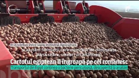 Cumpărăm din import cartofi scumpi şi care ne fac rău. Ai noştri se strică în depozitele producătorilor!