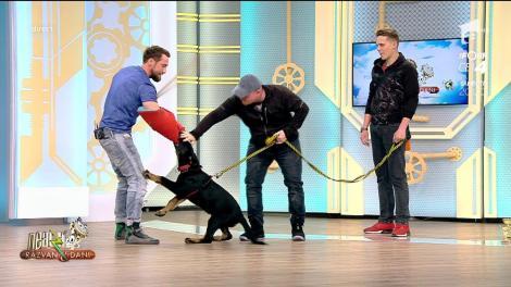 """UPS! Dani Oțil, mușcat de un ciobănesc german, ÎN DIRECT: """"Aşa îi stă bine unui infractor"""""""