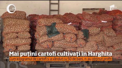 Mai puțini cartofi în Hargita, după ce produsele lor nu şi-au găsit locul în marile magazine