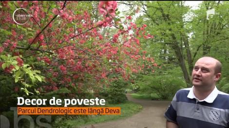 Decor de poveste! Magnoliile atrag turiștii, în parc