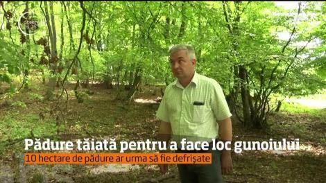 Revoltă într-o comună din Bistriţa-Năsăud. Pădurea a fost tăiată pentru a face loc gunoiului