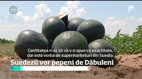 Pepenii dulci de Dăbuleni ar putea ajunge la suedezi