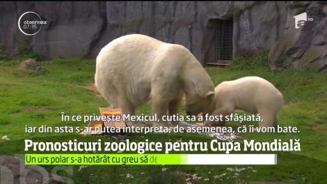 Pronosticuri zoologice pentru Cupa Mondială